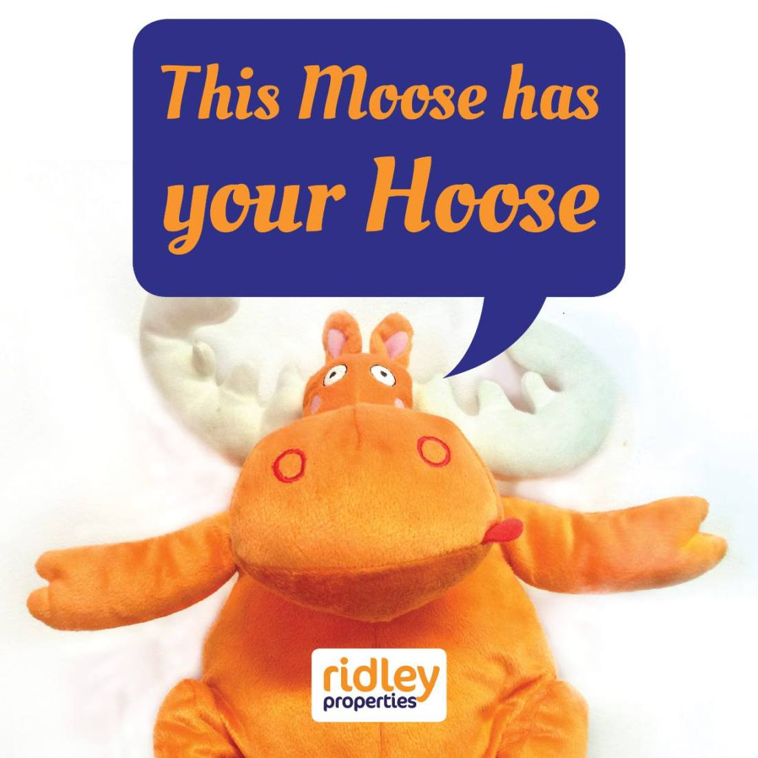 This Moose has Your Hoose  Marketing Campaign - Facebook/Twitter Profile Image